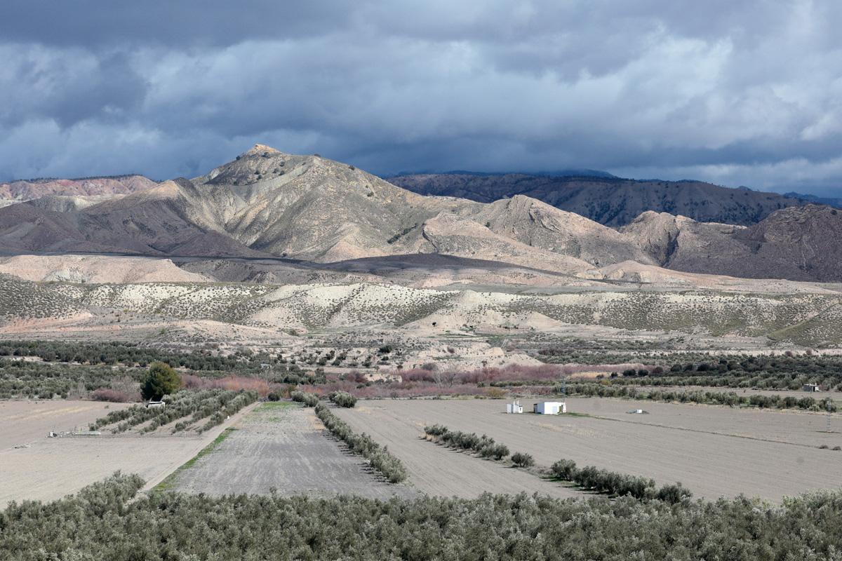 Olivar y huertos con cerros al fondo